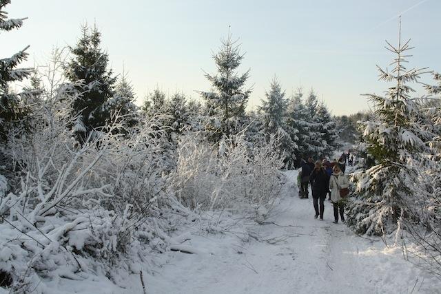 Kerstbomen in de Akker