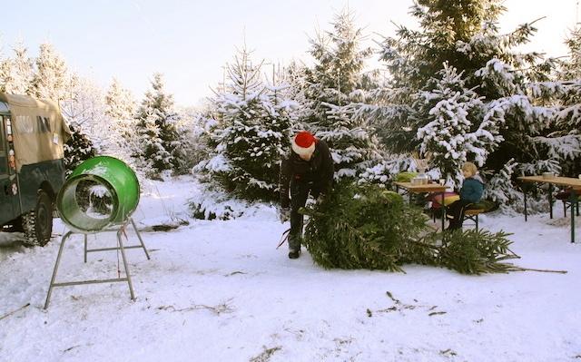 kerstbomen uitzoeken